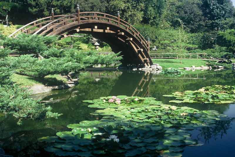 Koi Pond Filtration System Design