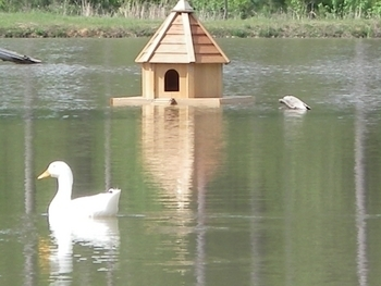 Pond Decor  Floating Duck House
