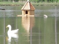 Pond Decor - Floating Duck House