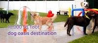 Dog Kennel, Dog groomer, Dog grooming, Dog Boarding in Dallas