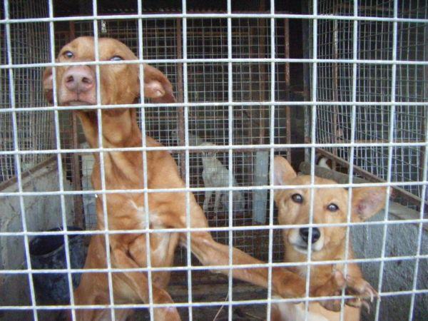 Start of hunting season reignites animal abuse concerns