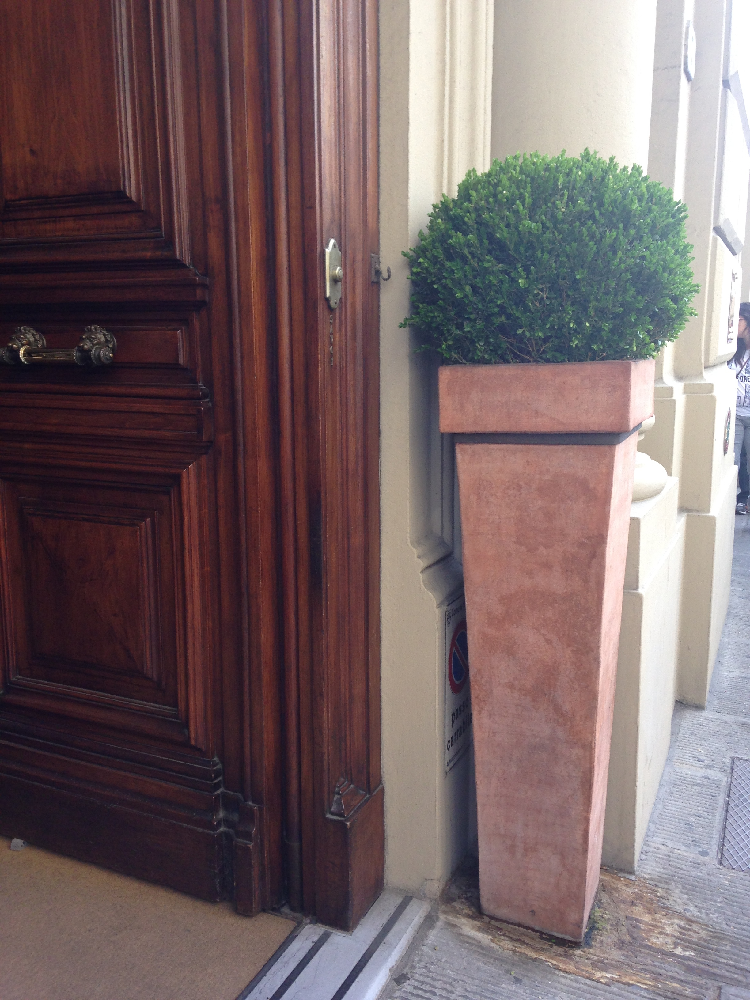 Chic In Italy The Potted Boxwood