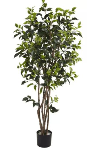 Ficus Tree via Wayfair