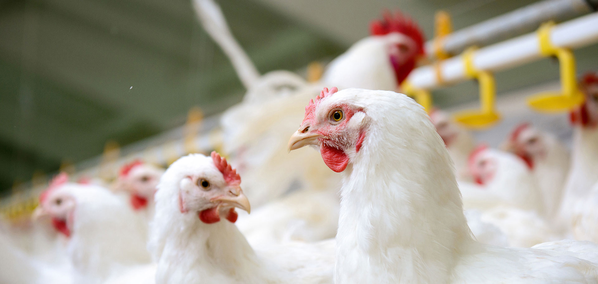 the poultry federation arkansas