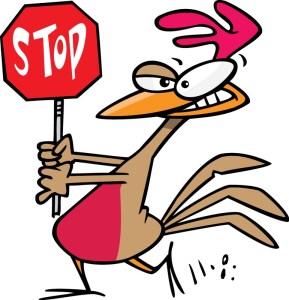 stop-chicken