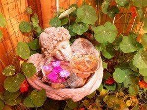 Flower Essence Healing Abilities