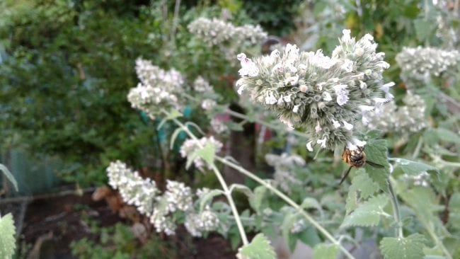 Sustainable Herb Gardening – Shoestring Herbalist