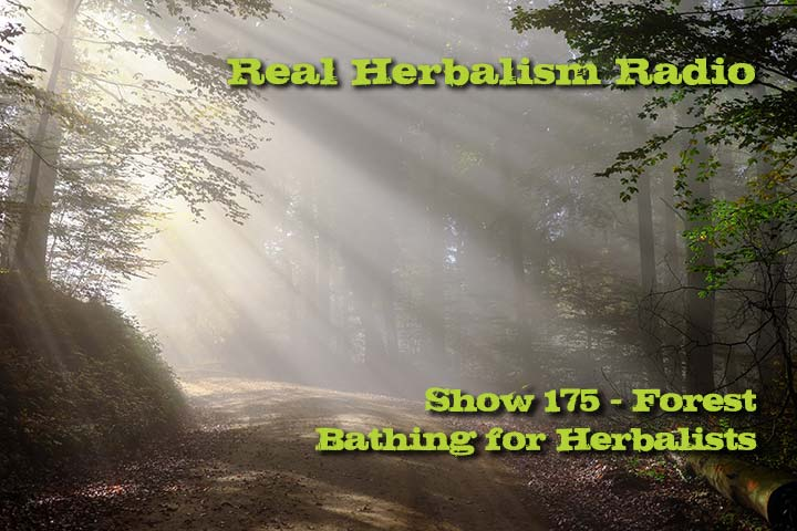 Forest Bathing For Herbalists