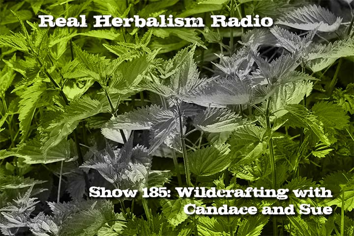 Show 185 Wildcrafting Herbs With Candace And Sue