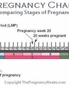 Stages of pregnancy chart also weeks months trimesters rh thepregnancyrealm