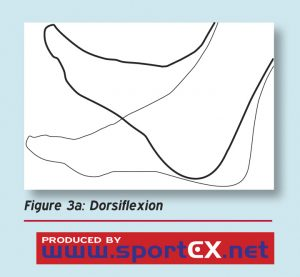 hamstring dorsiflexion