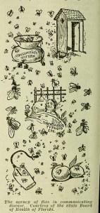 Flies carry disease