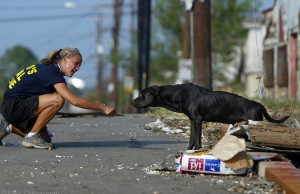 Many animals are still being rescued in New Orleans.