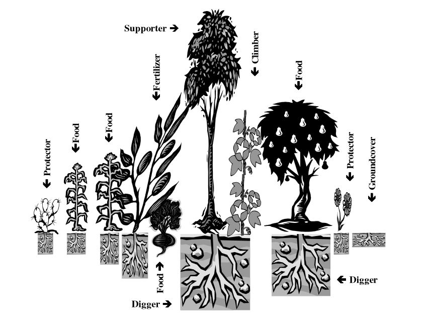 Permaculture Guilds and Growing a Camouflaged Food Forest