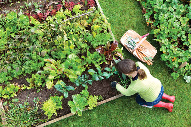 Having a garden now will greatly reduce your ramp up time if you find yourself dependent on this plot for food.