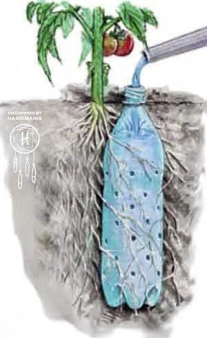 olla-drip irrigators - easiest way to do it - plantcaretoday_com Garden Hacks