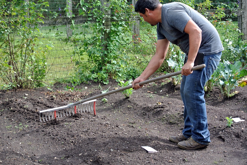 rake with hose for seed spacing 1 - themarthablog-dot-com