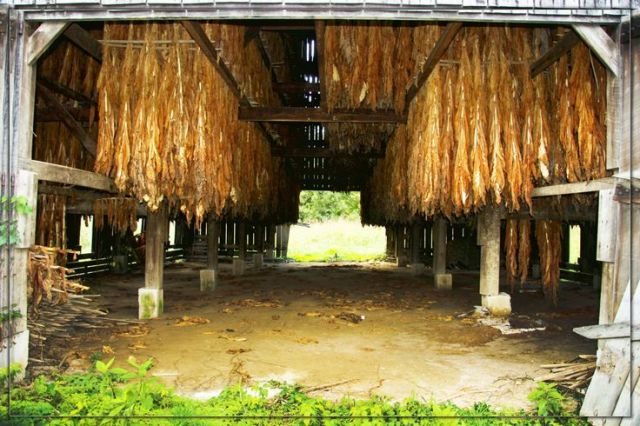 Old tobacco shed (braided corn or inverted grain bundles can be stored from racks and chains as tobacco once was)