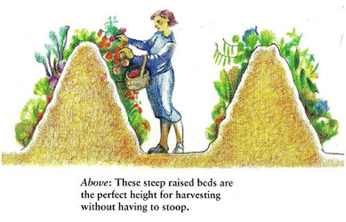 Tall hugelkultur beds increase our efficiency not only by decreasing water and fertilizer needs but also by increasing by 3-5 times the amount of growing space we have. Tall beds also eliminate some of the stooping involved with veggie gardens, creating longevity in our growing systems.
