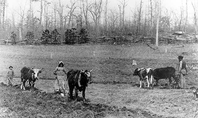 Farming in the 1800s was done by every member of the family by ox drawn plows.