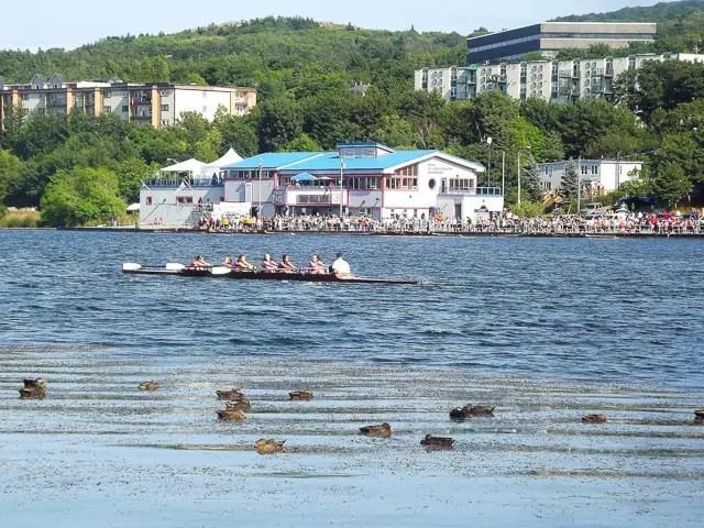 st. john's regatta (newfoundland tea buns)
