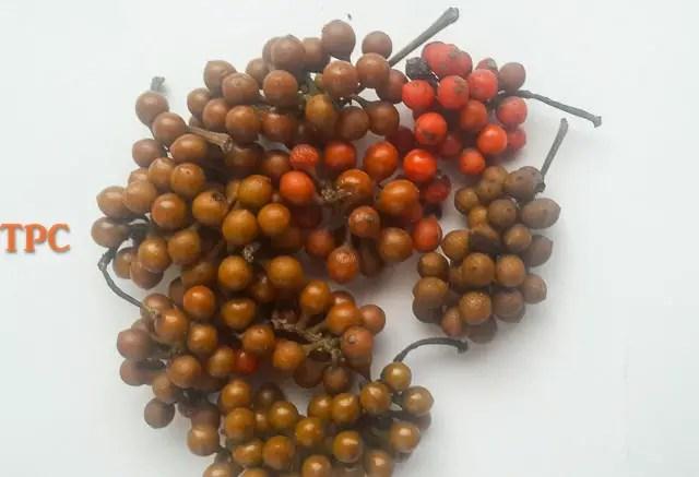 Uziza seed, fresh