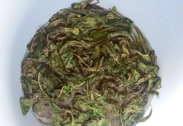 bitter-leaf-1-9