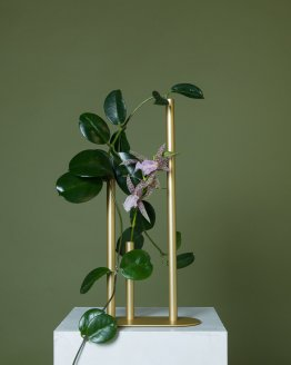 minimalist bud vase gold hire nz