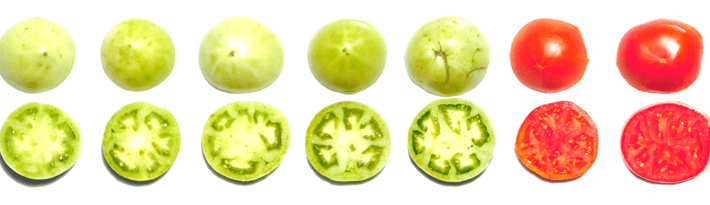 USDA Tomato Color Chart Archives - The Produce Nerd