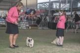 Sydney_Rotal_Dog_Show_The_Pug_Diary_03042015_0041