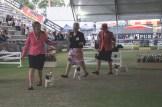 Sydney_Rotal_Dog_Show_The_Pug_Diary_03042015_0049