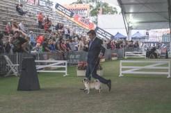 Sydney_Rotal_Dog_Show_The_Pug_Diary_03042015_0057