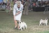 Sydney_Rotal_Dog_Show_The_Pug_Diary_03042015_0084
