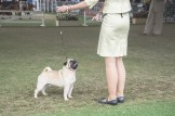 Sydney_Rotal_Dog_Show_The_Pug_Diary_03042015_0086