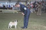 Sydney_Rotal_Dog_Show_The_Pug_Diary_03042015_0087