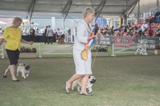 Sydney_Rotal_Dog_Show_The_Pug_Diary_03042015_0088