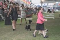 Sydney_Rotal_Dog_Show_The_Pug_Diary_03042015_0092