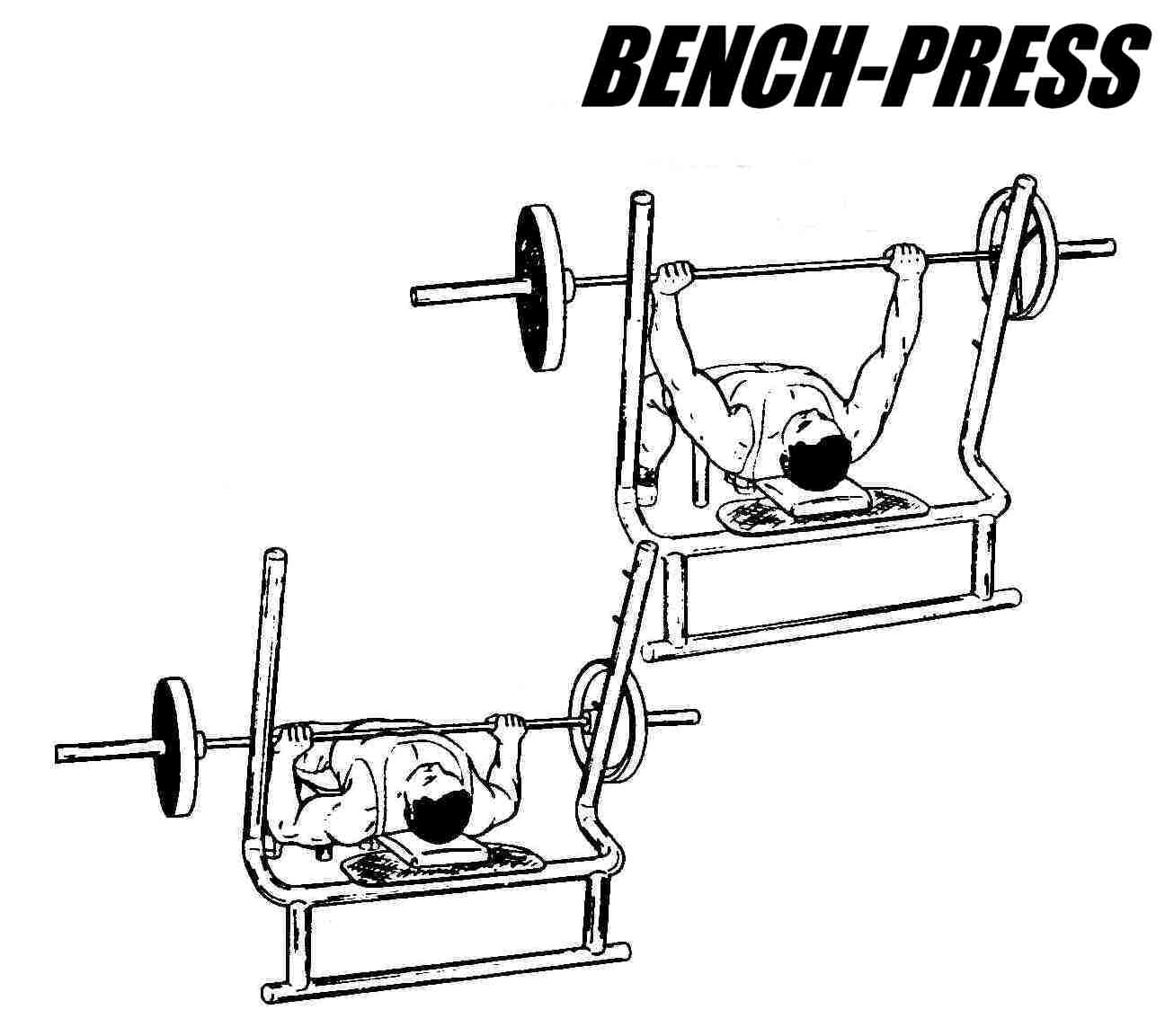 Bench Press Barbell Bench Press Exercise