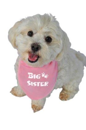 Ruff Ruff and Meow Doggie Bandana, Big Sister, Pink, Medium