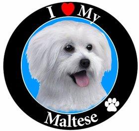 E & S Pets Car Magnet, Maltese, Puppy Cut