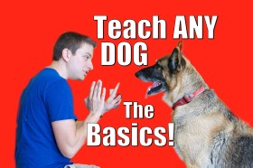 Strategy For Perfect Dog Training
