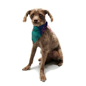 """Kess InHouse Caleb Troy """"Painted Clouds Double"""" Pet Bandana and Scarf, 28 by 20 by 20-Inch"""
