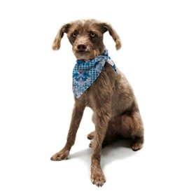 """Kess InHouse Aimee St. Hill """"Ornate Blue"""" Pet Bandana and Scarf, 28 by 20 by 20-Inch"""