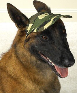 LARGE – GREEN – Camo Style Dog Caps