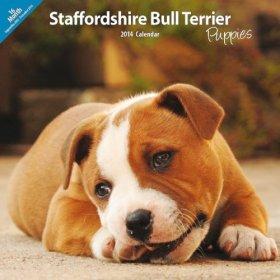 Staffordshire Bull Terrier Puppies 2014 Wall Calendar