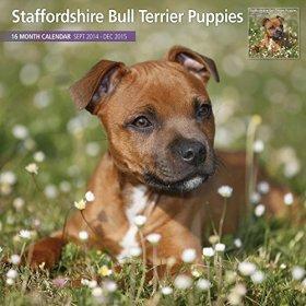 Staffordshire Bull Terrier Puppies 2015 Wall Calendar