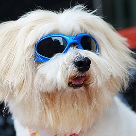 Pet Dog Sunglasses – Protective Eyewear Goggles Small Waterproof Protection (Blue)