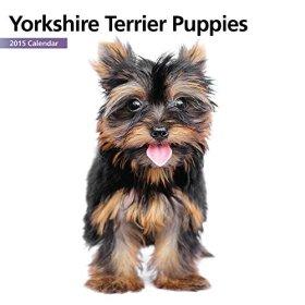 Yorkshire Terrier Puppies Mini 2015 Wall Calendar