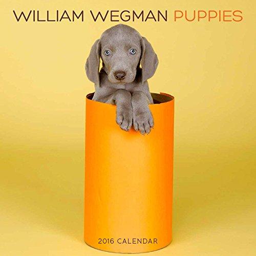 William Wegman Puppies 2016 Wall Calendar