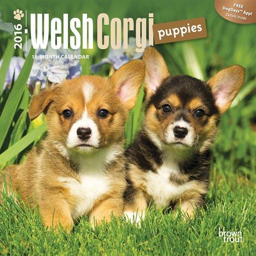 Welsh Corgi Puppies 2016 Mini 7×7 (Multilingual Edition)
